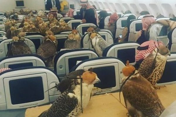 Nezvyčajní pasažieri. Okrem ľudí možno v Saudskej Arábii prevážať aj sokoly.