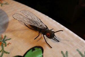 Mal to byť mravec, ale vznikla z neho mucha.