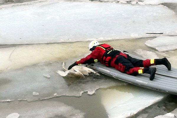 K telám mŕtvych vtákov sa hasiči dostali pomocou nafukovacieho matracu.