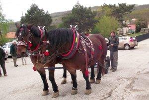 Kone zapriahol furman na parkovisku na Kláštorskej ulici.