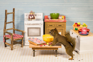 Stôl, stoličky, nábytok aj minidoplnky. Veverice majú všetko vo veľkosti, ktorá im vyhovuje.