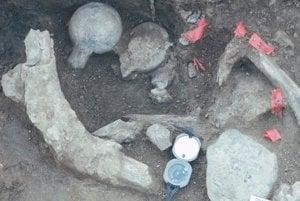 Pozostatky mastodonta v lokalite Cerutti Mastodont pri San Diegu.