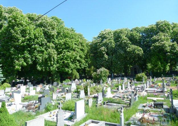 Pagaštanová aleja v levickom cintoríne.