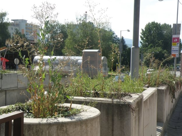 Pred pár rokmi boli kvetináče nad podjazdom plné buriny.
