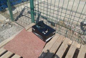 Pred bránou útulku niekto nechal v škatuli mačiatka, ktoré neprežili horúčavu.