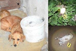 Podozrenie z týrania zvierat v Nesvadoch