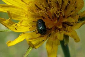 Krása pieninských kvetov a hmyzu.
