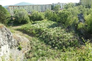 Obrovská masa zeminy so stavebným odpadom zarástla. Načo bolo dobré naviezť ju do bane už vlani na jeseň?