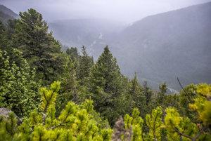 Na daždivej ceste v pralese sa striedali dúha a hmla a v jednom momente to dokonca vyzeralo, že začne snežiť.