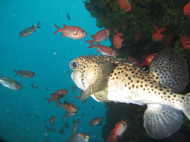 Na Kapverdách je mimoriadne pestrý podmorský svet.