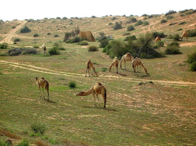 Ras Al Khaimah je známy rôznorodou krajinou.