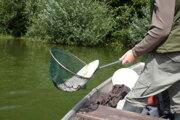 Boleň je dravá kaprovitá ryba. Jej početnosť a aj výlov sa v Liptovskej Mare zvýšil.