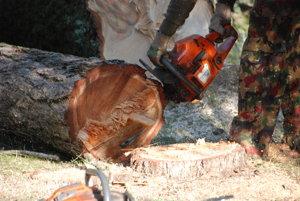 V Turčianskych Tepliciach sa aj napriek petícii občanov pílili stromy v malom parčíku pri liečebnom dome Malá Fatra.