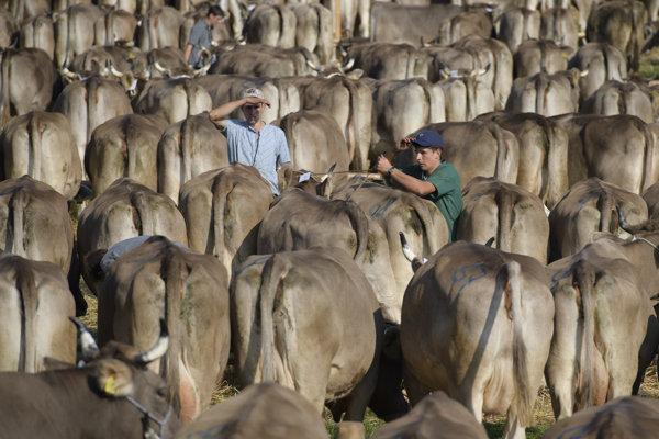 Poľnohospodárske zvieratá ohrozujú klímu.