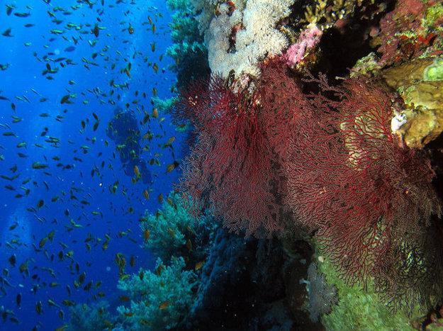 Potápanie v exotických destináciách je vždy zážitkom.