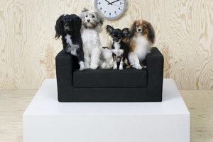 Ikea uviedla na trh novú sériu nábytku pre domáce zvieratá.