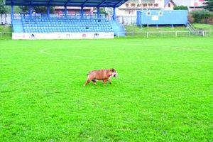 Futbalový areál v Medzeve. Štvrtoligista hrá svoje domáce zápasy na tomto ihrisku. Športových akcií sa zúčastňuje aj maskot mužstva – Luisa.