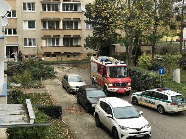 Spadnutý strom Pod Sokolicami.