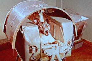 Na archívnej snímke z 5. novembra 1957 pes Lajka, prvá živá bytosť vo vesmíre, na palube Sputnika II.
