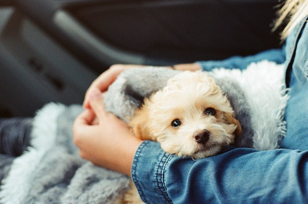 Ak budete pri cestovaní v pohode vy, bude v pohode aj váš pes.