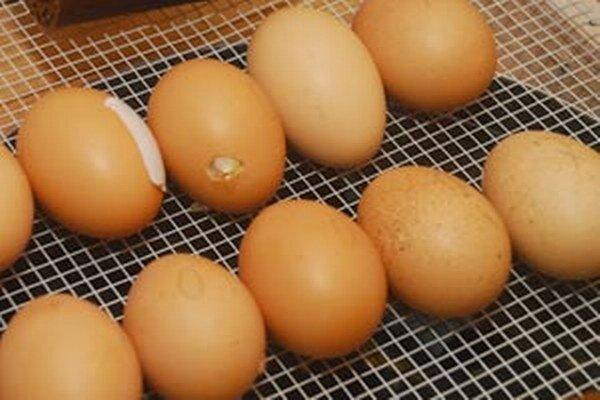 Najčastejším zdrojom salmonelózy bývajú čerstvé vajíčka.