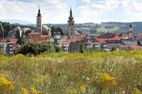 V lete Bystrica doslova zožltne od zlatobyle