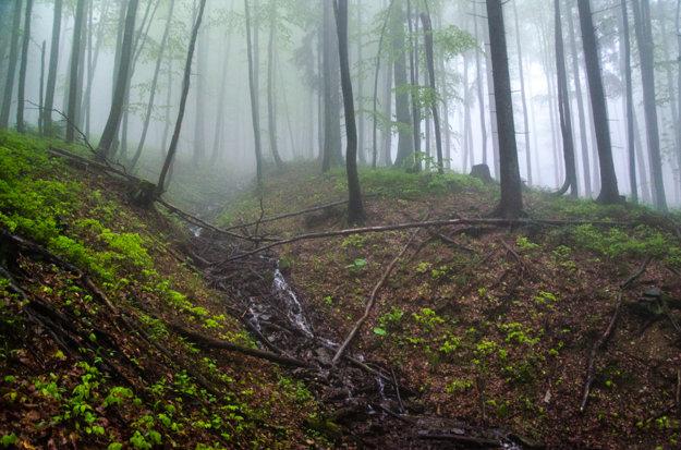 Aj lesné úseky majú svoju atmosféru