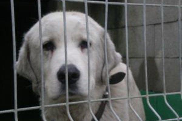Karanténna stanica je momentálne domovom pre 62 psov.
