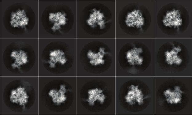 Vedci ukázali prepis DNA v najväčšom detaile.