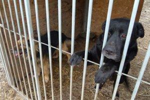 V Leviciach ročne odchytia okolo 300 túlajúcich sa zvierat.