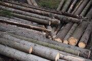 Ťažba ihličnatých lesov bude pravdepodobne pokračovať aj v blízkej dobe.