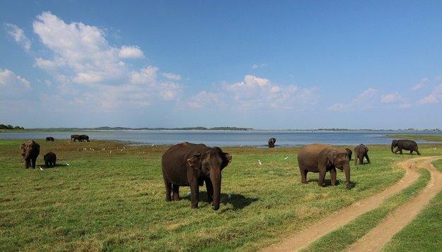 Srí Lanka: Nádherná divoká príroda.