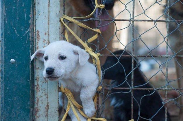 Než si psa kúpite alebo adoptujete, mali by ste si tento krok poriadne premyslieť.