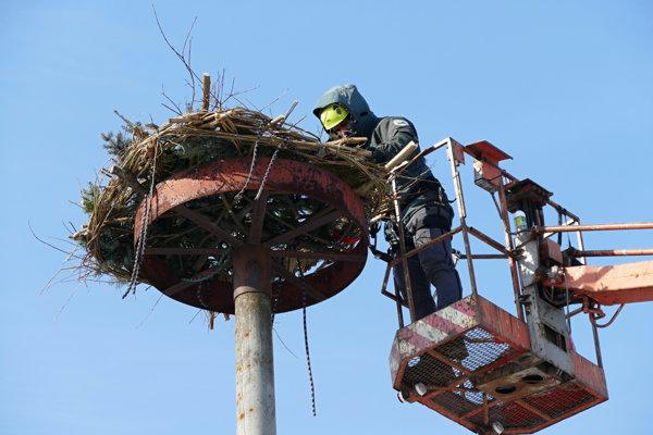 Bocianov má prilákať nový výplet hniezda.