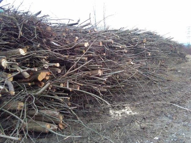 Drevo odstránia, tvrdia.