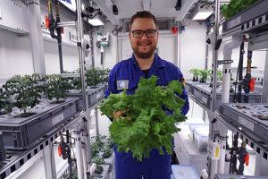 Zeleninu pestovali bez pôdy, denného svetla a pesticídov.