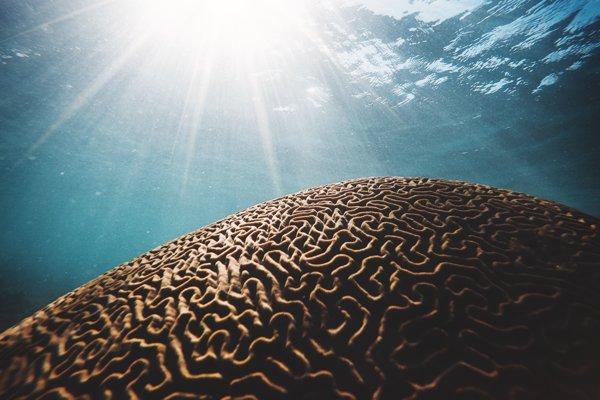 Morský koral pod horúcimi lúčmi Slnka.