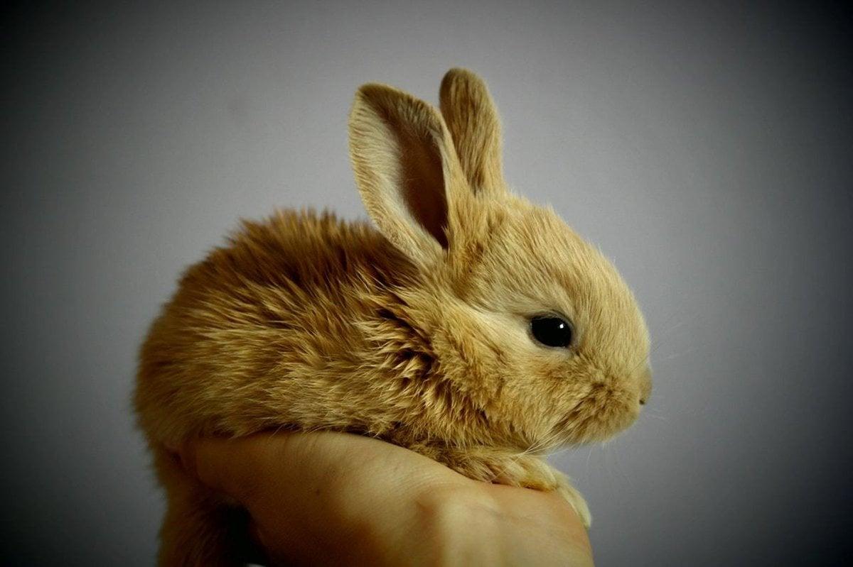 Ako sa starať o bytového králika? - Žena SME