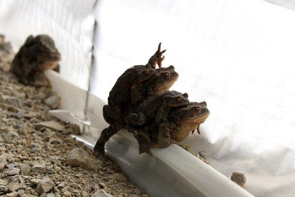 Zábrany pred migrujúcimi žabami.