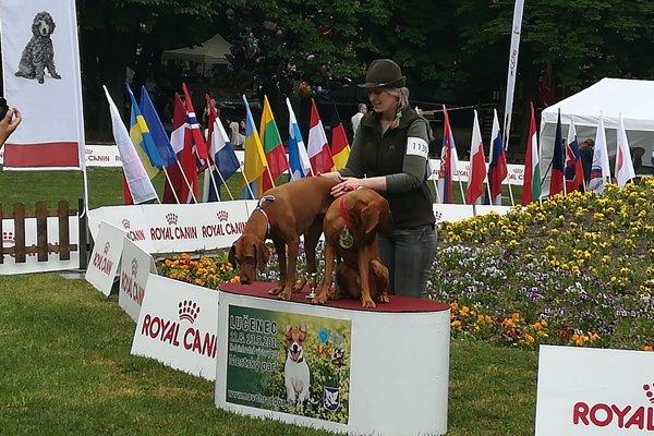 Medzinárodná výstava psov