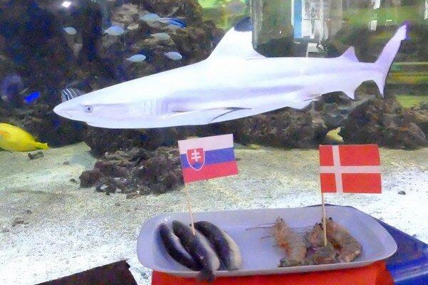 Prvú tipovačku už majú žraloky za sebou. V najbližšom zápase viac veria Slovensku.