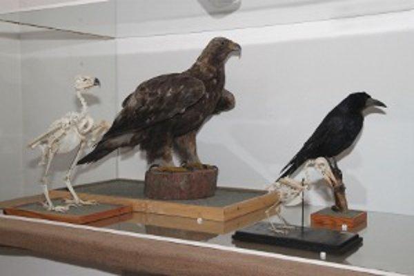 Na výstave budú nielen lebky vtákov.