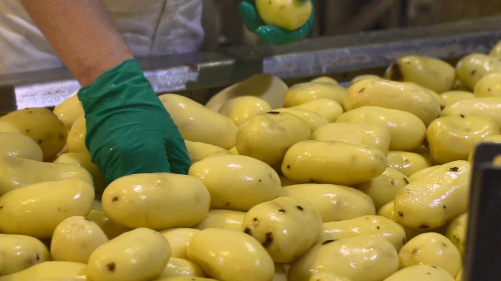 Vyrábané z fakt obrovských zemiakov.
