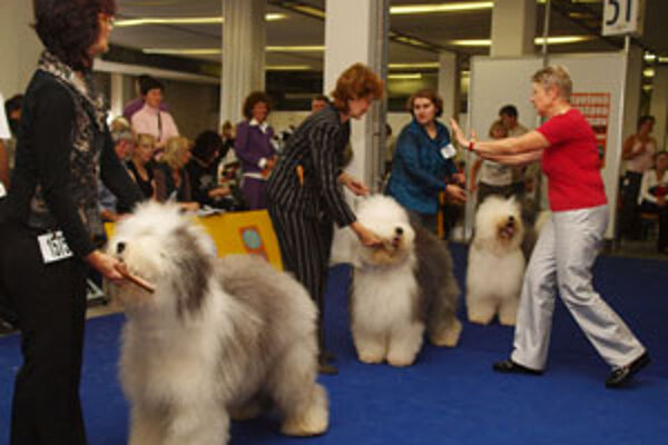Medzinárodná výstava psov bola v Inchebe v Bratislave.