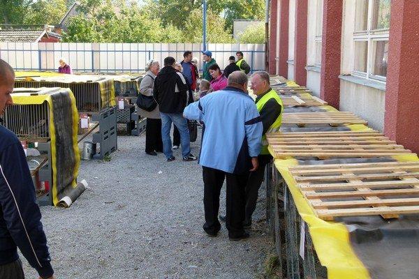 Výstavu navštívili chovatelia nielen z Beluše, ale aj rôznych častí regiónu.