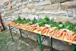 Do súťaže o najväčšiu mrkvu sa prihlásilo 13 pestovateliek.