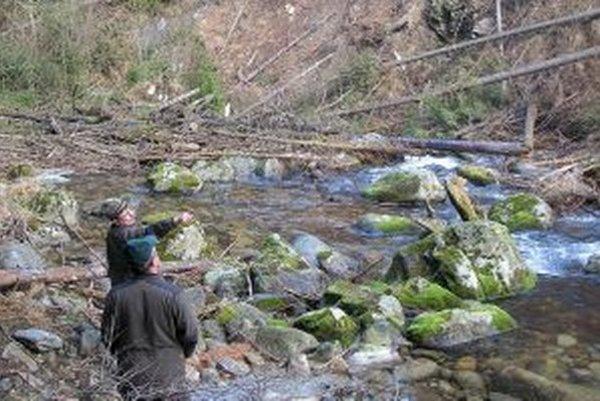 Lesníci zisťujú poškodenia lesných porastov.