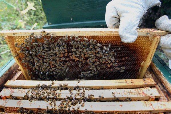 Fabrička na výrobu medu.