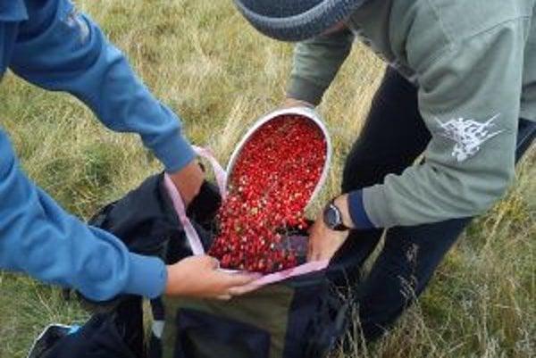 V niektorých národných parkoch je zber plodov povolený len na vlastnú spotrebu.