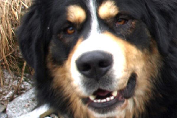 Majitelia psov by mali dávať pozor, s kým sa stýkajú ich štvornohí miláčikovia.